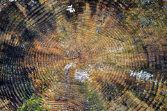 Tree Rings Abstract Background Royalty Free Stock Photo
