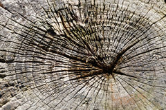 Tree rings of an aged log Royalty Free Stock Photo
