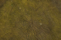 Tree rings bacground. Or texture Royalty Free Stock Image