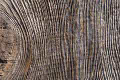 Tree rings background Stock Images