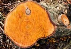 Tree rings in Black Alder Stock Photos