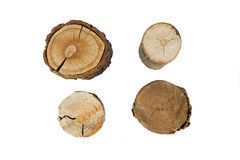 Tree rings closeup isolated on white background Royalty Free Stock Photos