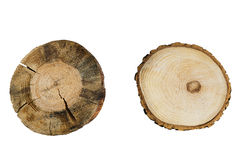 Tree rings closeup isolated on white background Stock Images