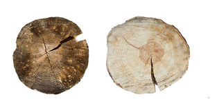 Tree rings closeup isolated on white background Royalty Free Stock Photo