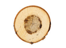 Tree rings closeup isolated on white background Stock Photo