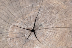 Tree rings. Are counted to determine the age of a tree Stock Photo