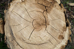 Tree rings. Cracked wood surface Stock Image