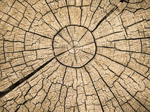 Tree Rings With Cracks Royalty Free Stock Image