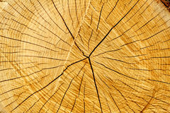 Tree rings and cracks. Seasoned trunk cut with distinct annual rings, cracked when it dried. Very nice golden color. Excellent background Royalty Free Stock Images