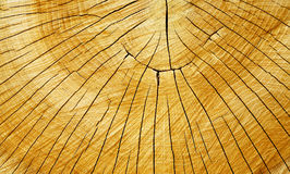 Tree rings and cracks. Seasoned trunk cut with distinct annual rings, cracked when it dried. Very nice golden color. Excellent background Stock Photos