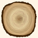 Tree rings, cut stump. Crossection of tree trunk, cut stump, wooden cut texture - vector illustration, you can easily change the color and size Royalty Free Stock Photo