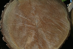 Tree rings, Stock Image