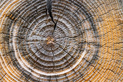 Tree Rings. The end of a log in an old cabin shows tree growth rings and a weathered, cracked texture Stock Images