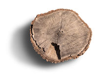 Tree rings on an isolated stump Royalty Free Stock Photo