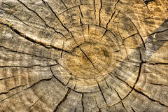 Tree rings in log Stock Photo