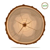 Tree-rings on log. Tree-rings on wooden log. Vector graphics. Isolated object Stock Image