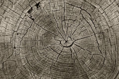 Tree Rings Stock Images