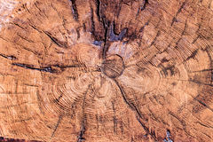 Tree rings old weathered wood texture. With the cross section of a cut log showing the concentric annual growth rings as a flat nature background Royalty Free Stock Image