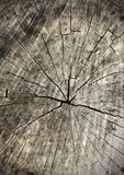 Tree rings old wood texture as background, cross section Royalty Free Stock Image