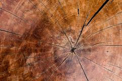 Tree rings old wood texture background,Cross section annual ring stock photography