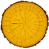 Tree rings saw cut tree trunk background Stock Photo