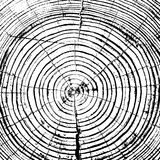 Tree rings saw cut tree trunk background Stock Images