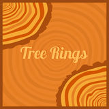 Tree rings. Stock Photography