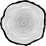 Tree rings. Stock Photos