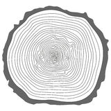 Tree rings. Royalty Free Stock Image