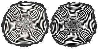 Tree rings. Stock Photo