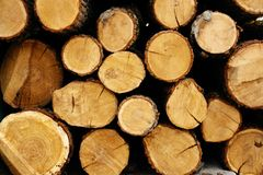 tree rings ,sawn logs lie on top of each other stock images