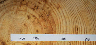 Tree rings.  Section. Dated.  New Jersey. Cut section of a tree.  From 2015.  Shows variable growth rings back to before 1960.  Northern New Jersey.  Wider rings Stock Image