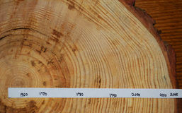 Tree rings.  Section. Dated.  New Jersey. Cut section of a tree.  From 2015.  Shows variable growth rings back to before 1960.  Northern New Jersey.  Wider rings Stock Photography
