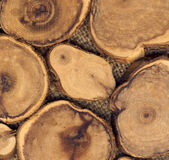 TREE RINGS  texture Stock Images