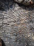 Tree rings texture Royalty Free Stock Photo