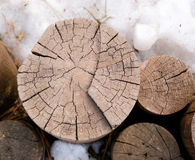 Tree rings. In winter snow Royalty Free Stock Photos