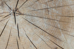 Tree rings on a wood section Stock Photos