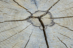 Tree rings on a wood section Stock Photography