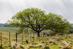 Tree Rio Grande do Sul Farm Royalty Free Stock Photos
