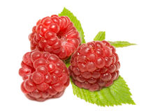 Tree ripe raspberries on leaves Stock Photo
