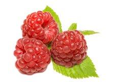 Tree ripe raspberries on leaves Stock Photo