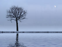 Tree and river. Lonely tree and mirror river (see more in my portfolio Stock Photos