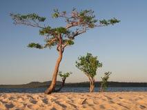 Tree in the river. Tapajós - Amazônia - Brazil stock image