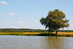 Tree on a river. Beautiful landscape. Lonely tree on a river Royalty Free Stock Image