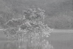 Tree in river on canvas background Stock Photography