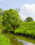 A tree by a river. The tree grows near the river Stock Image