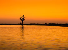 Tree on a river in Myanmar Stock Photo