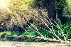 Tree in the river Stock Photography