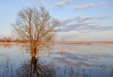Tree in the river near Rostov Royalty Free Stock Photography