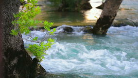 Tree in river. Shot of green leaves of a tree growing in Manavgat river near waterfall stock video footage